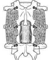 Fig 6.jpg